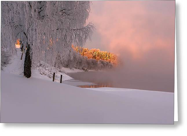 Winter Light Greeting Card by Rose-Maries Pictures