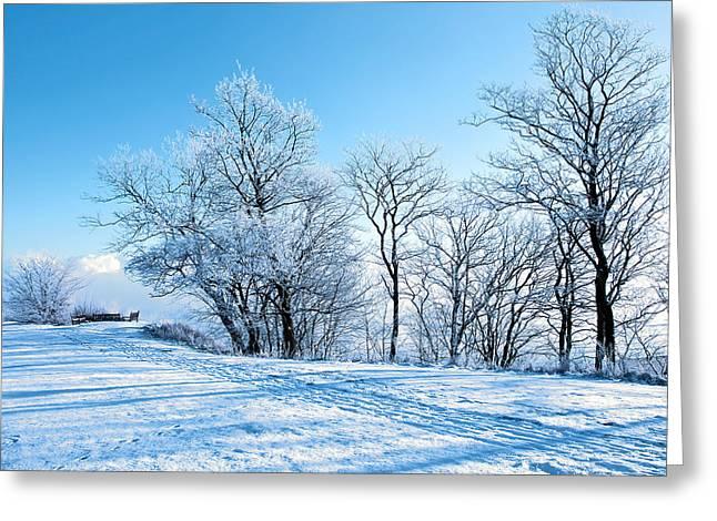 Winter Lights Greeting Card by Svetlana Sewell