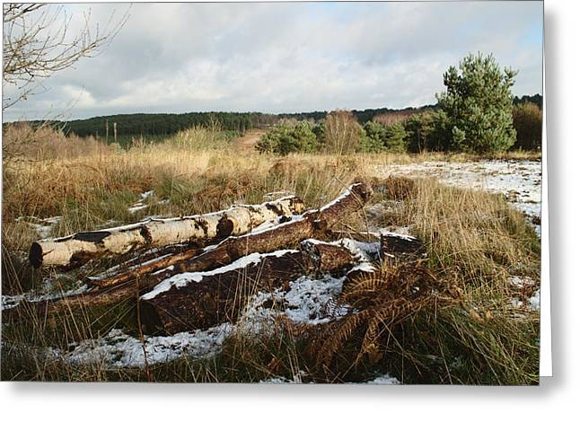 Winter Logs On Hednesford Hills Greeting Card by Adrian Wale