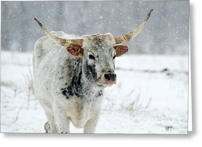 Winter Longhorn Greeting Card