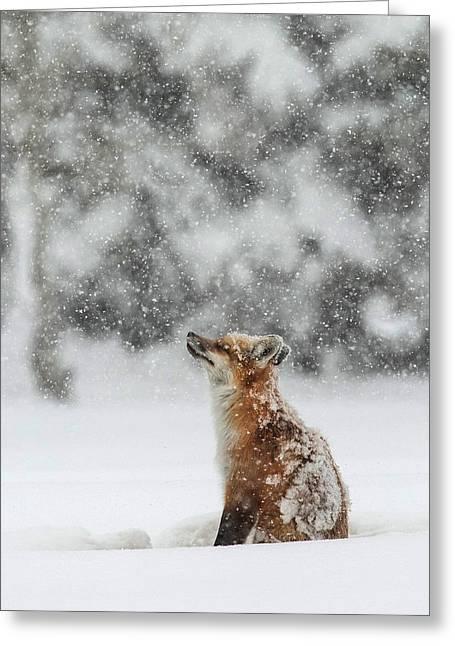 Winter Magic Greeting Card by Sandy Sisti
