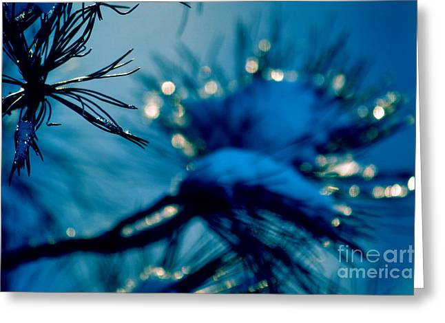Greeting Card featuring the photograph Winter Magic by Susanne Van Hulst