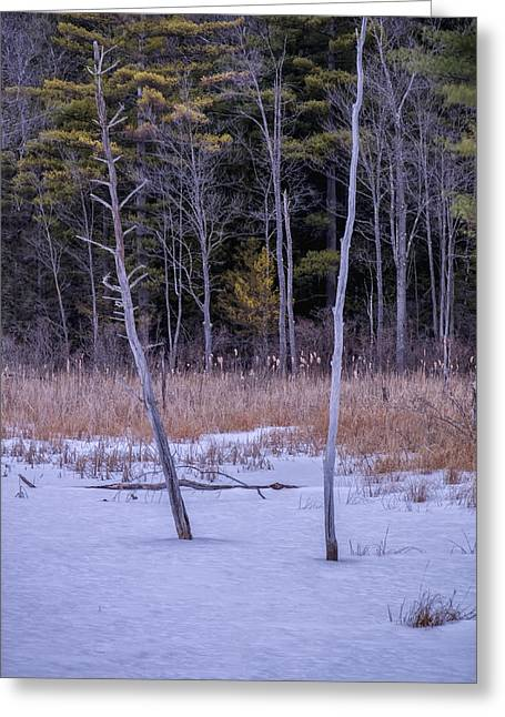 Winter Marsh And Trees Greeting Card