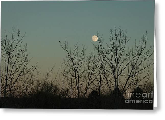 Greeting Card featuring the photograph Winter Moon by Ana V Ramirez