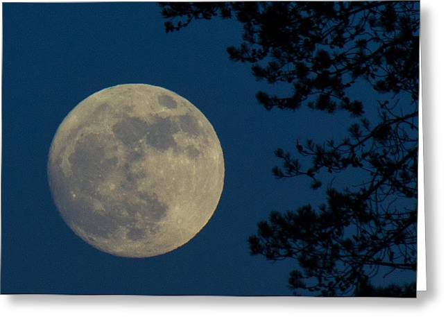 Winter Moon Greeting Card by Randy Hall