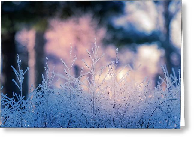 Winter Morning Light Greeting Card