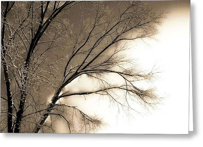 Winter Mulberry  Greeting Card by Larry Ney  II