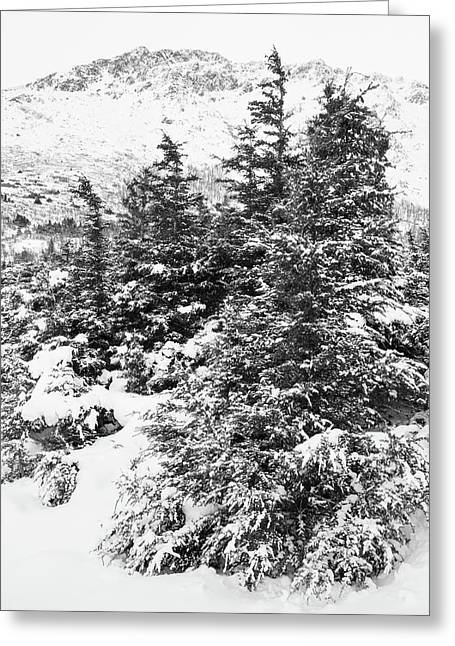 Winter Night Forest M Greeting Card