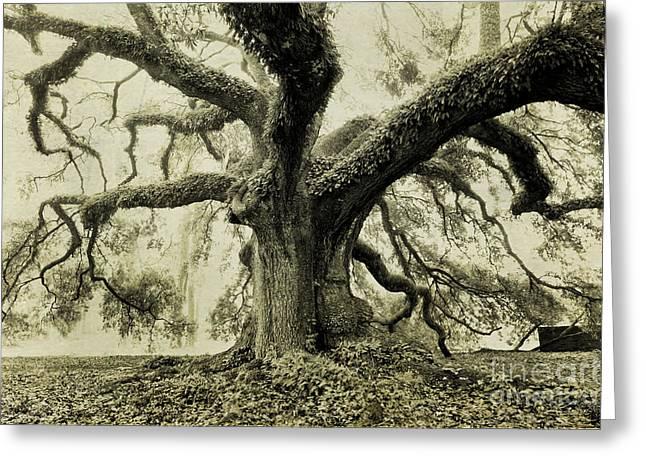Winter Oak Greeting Card by Scott Pellegrin