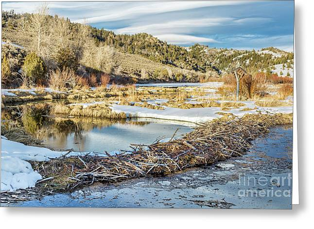 Winter On Beaver Swamp Greeting Card