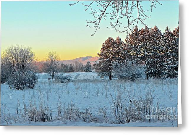 Winter On The Tree Farm Greeting Card