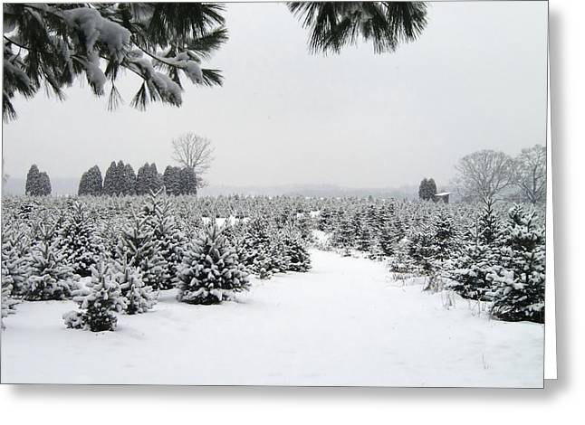 Winter On The Tree Farm Greeting Card by Richard Mansfield