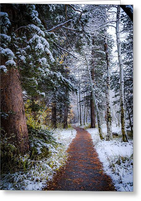 Winter Path Greeting Card by Cat Connor