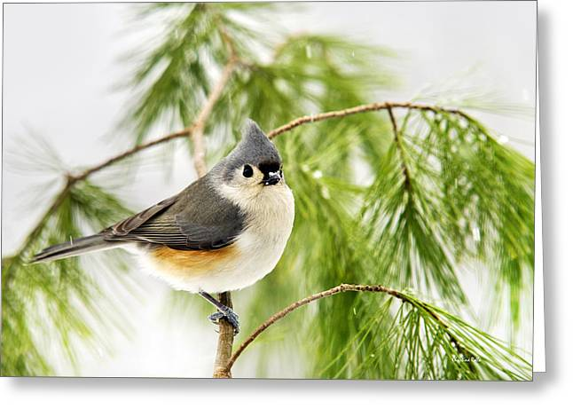 Winter Pine Bird Greeting Card by Christina Rollo