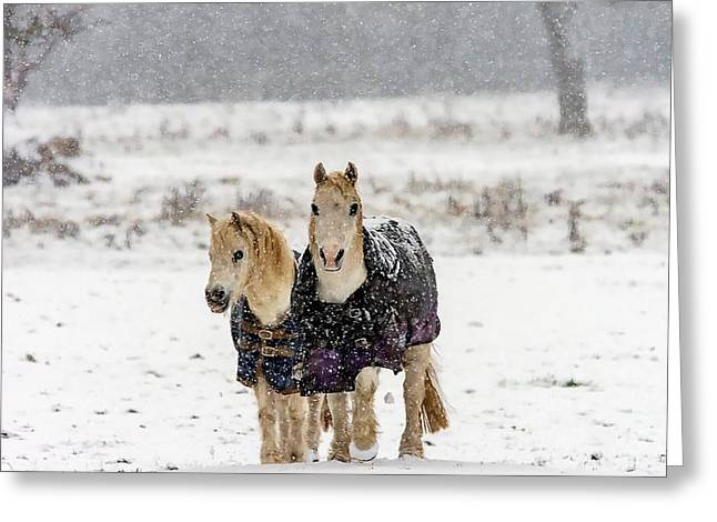 Greeting Card featuring the photograph Winter Pony by Cliff Norton