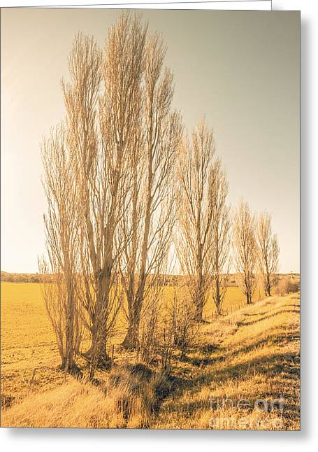 Winter Poplar Trees Greeting Card by Jorgo Photography - Wall Art Gallery