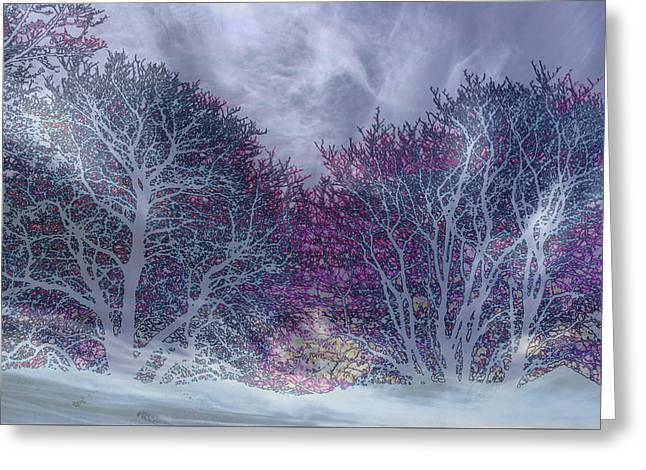 Greeting Card featuring the photograph Winter Purple by Nareeta Martin