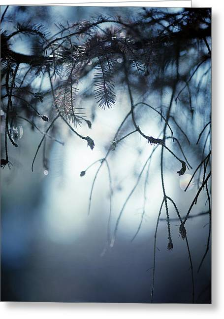 Greeting Card featuring the photograph Winter by Rebecca Cozart