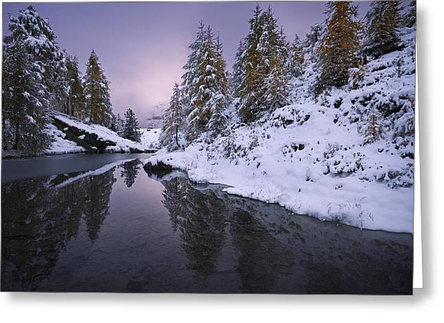 Winter Reverie Greeting Card
