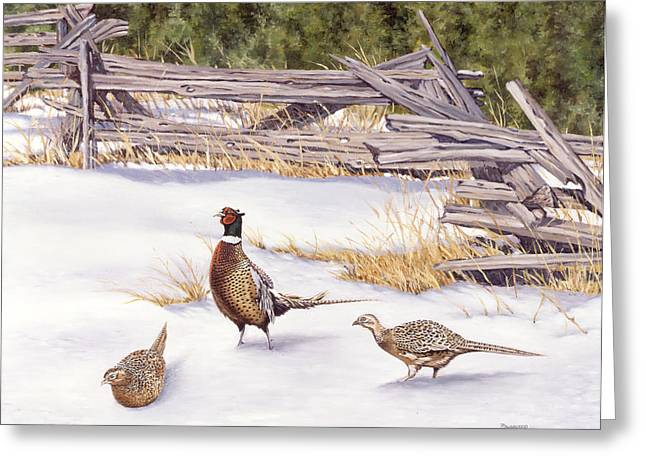 Winter Ringed-necks Greeting Card by Richard De Wolfe