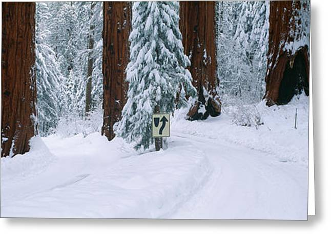 Winter Road Into Sequoia National Park Greeting Card by Panoramic Images