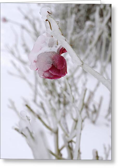 Winter Rose Greeting Card by Arthur Fix