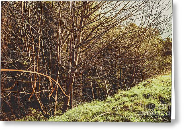 Winter Rural Tasmania Details Greeting Card by Jorgo Photography - Wall Art Gallery