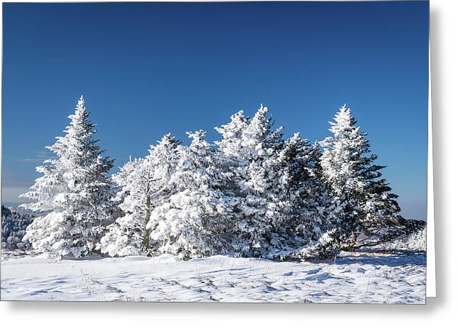Winter Scene Along The Appalachian Trail Greeting Card by Serge Skiba