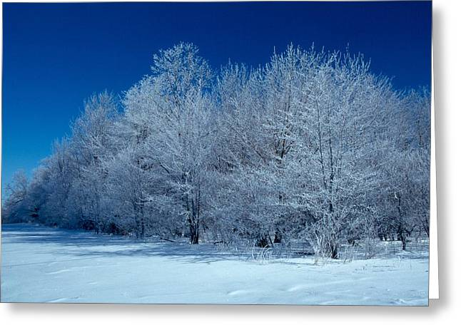 Winter Scene Greeting Card by Raju Alagawadi