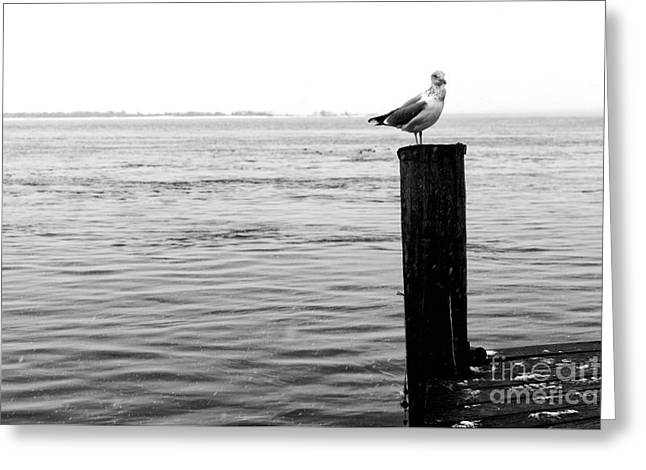 Winter Seagull Greeting Card by John Rizzuto