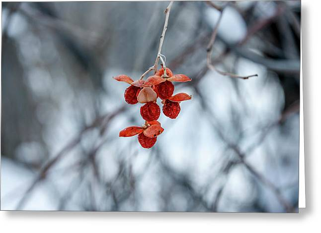 Winter Seeds Greeting Card