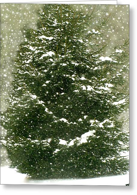 Winter Shines Over Pine Greeting Card