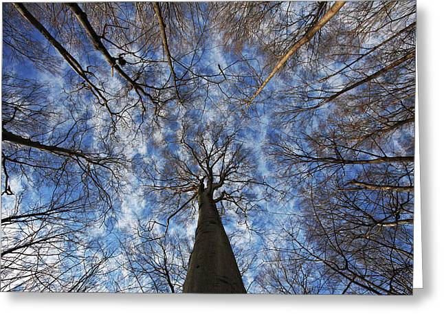 Winter Sky Greeting Card by Mircea Costina Photography