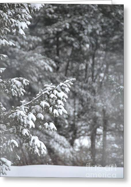 Greeting Card featuring the photograph Winter Snow by John Black