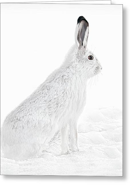 Greeting Card featuring the photograph  Winter Snowshoe Hare by Jennie Marie Schell