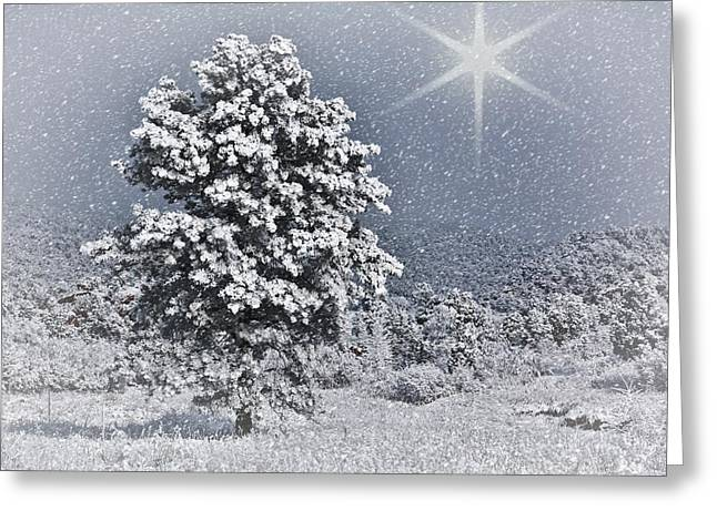 Greeting Card featuring the photograph Winter Solitude 2 by Diane Alexander