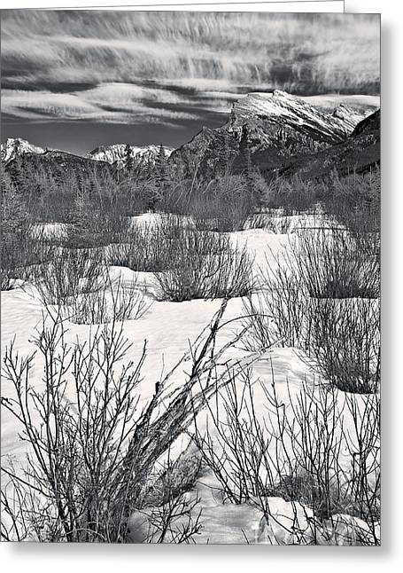 Winter Spice In Monochrome Greeting Card