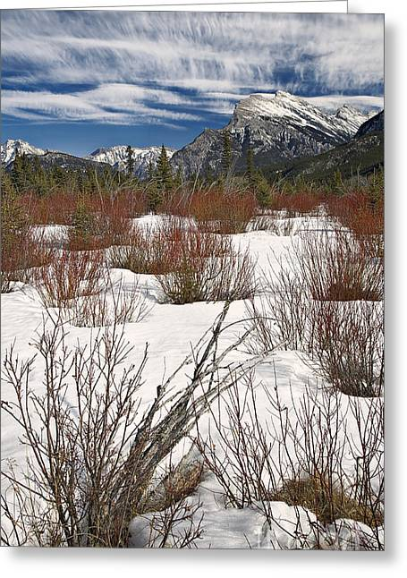 Winter Spice Greeting Card