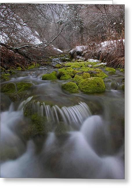 Winter Spring Hollow Greeting Card by David Andersen