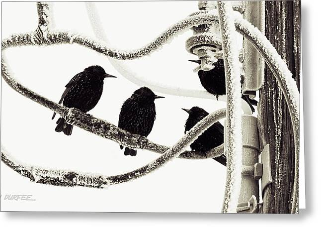 Greeting Card featuring the photograph Winter Starlings by Don Durfee