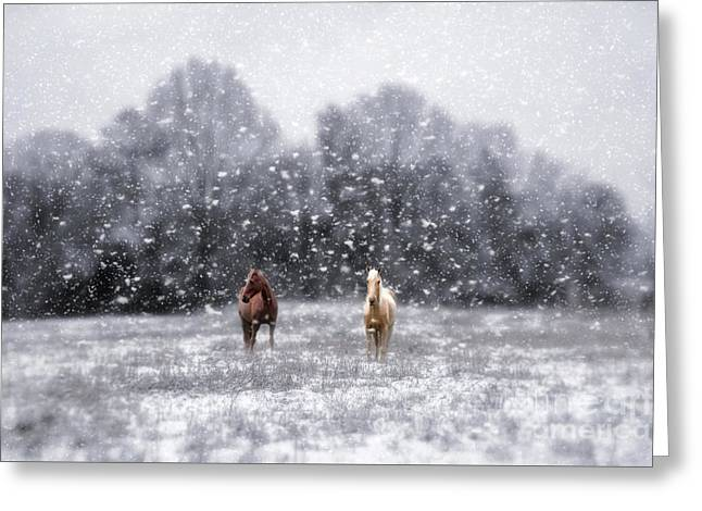 Winter Storm Greeting Card by Darren Fisher