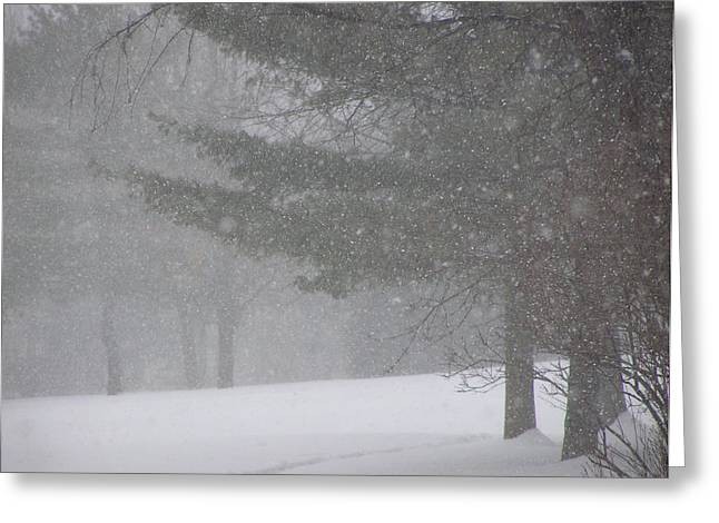 Winter Storm In Bush Greeting Card by Richard Mitchell