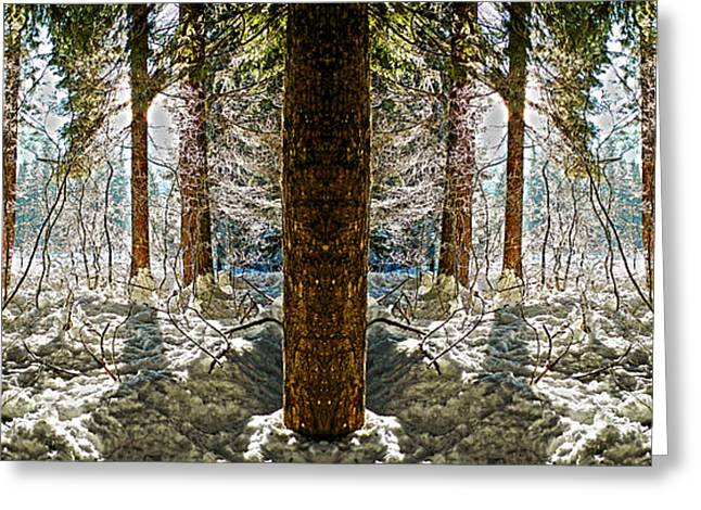 Winter Sun Shinning Through Trees Reflection Greeting Card by Pelo Blanco Photo