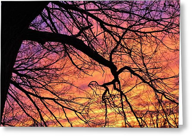 Winter Sundown Greeting Card by John Adams