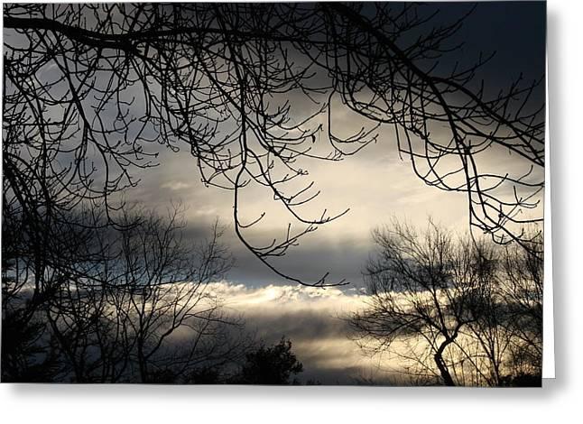 Winter Sunrise Greeting Card by Liz Vernand
