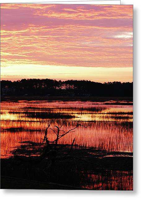 Winter Sunrise Greeting Card by Margaret Palmer