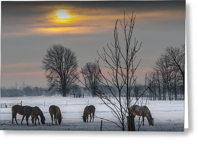 Winter Sunrise Over A Pasture With Horses Greeting Card by Randall Nyhof