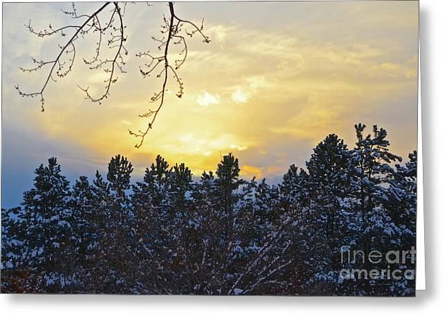Winter Sunset On The Tree Farm #1 Greeting Card