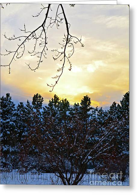 Winter Sunset On The Tree Farm #2 Greeting Card