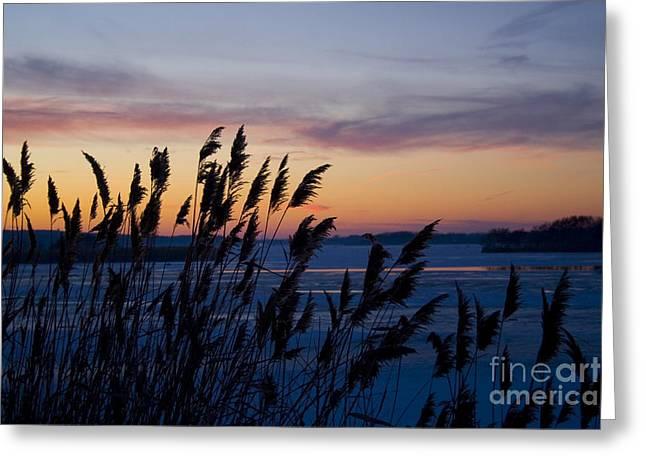 Winter Sunset  Greeting Card by Paula Guttilla